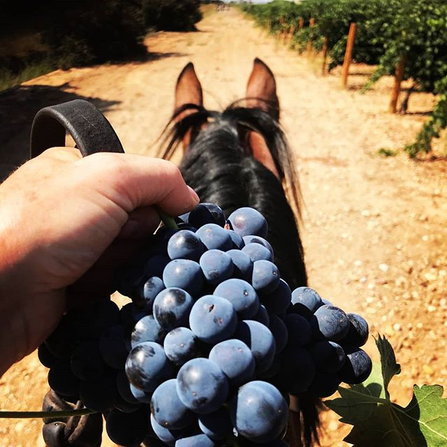 Horse trail through the vinyards of Ribera del Duero