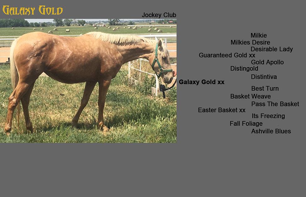 Galaxy Gold Photo Pedigree Foals.jpg