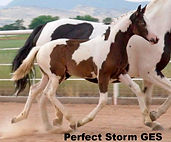 Perfect Storm GES_edited.jpg