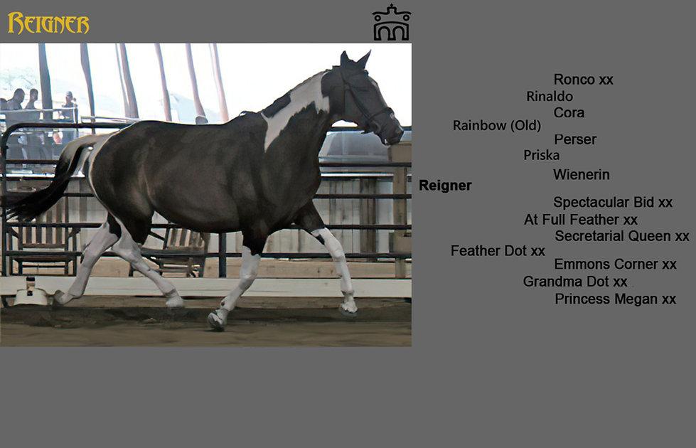 Reigner Photo Pedigree Foals.jpg