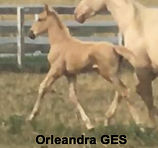 2019 Orleandra GES - Filly Mystical Note