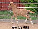 Wesley GES 1_edited.jpg