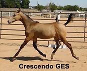 2019 Crescendo GES Colorado Skrodstrup x