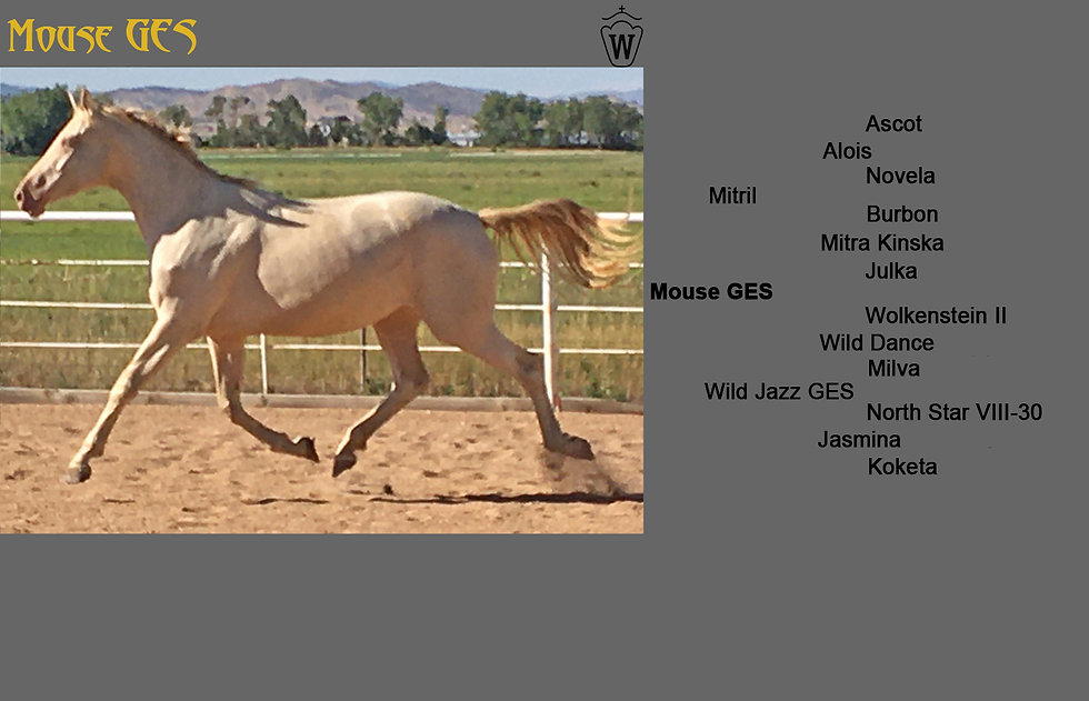 Mouse GES Photo Pedigree Foals.jpg