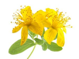 Healing Effects of St. John's Wort
