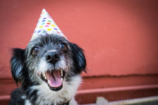 Fluffy Birthday.jpg