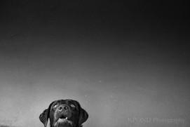 Winston Anticipation.jpg