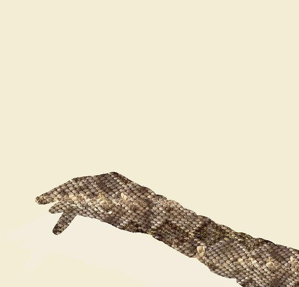 Snakeskin website .jpg