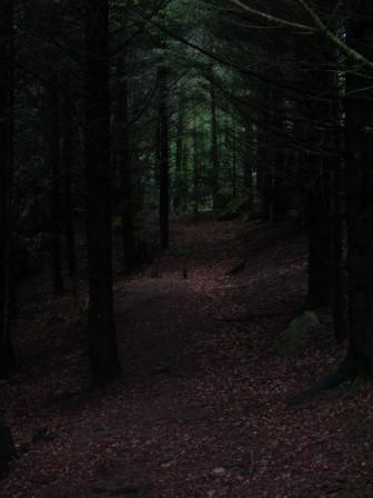 Bos bij Beaudiers