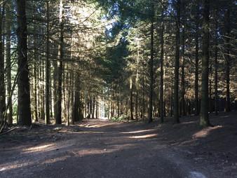 Het bos bij Beaudiers