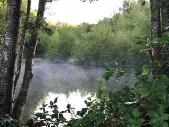 Mist in de herfst