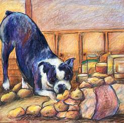 Pokey sneaking Potatoes