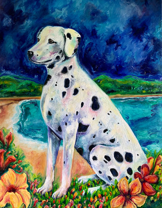 Dalmation in Puerto Rico
