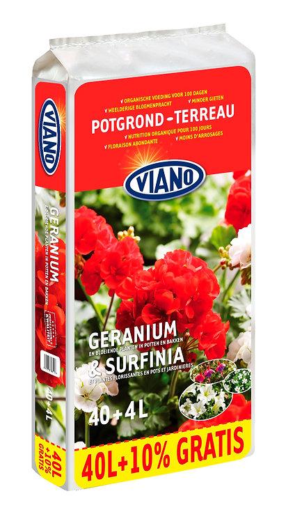 Viano Geranium potgrond