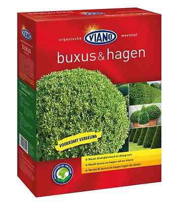 Viano - Buxus & Hagen