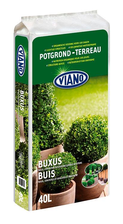 Viano Buxus potgrond