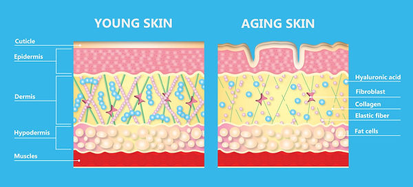 skin.jpeg
