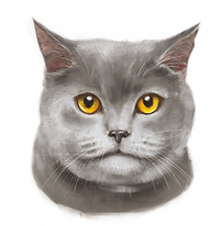 Gatto_1.png