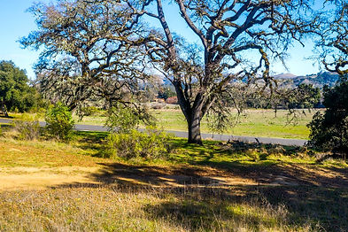 Just a short 5-minute stroll from the private Preserve's Ranch Club Hacienda, Sports and Equestrian Centers, lies this oak-studded 4.57-acre homesite. With 1.4 acres of homeland, build your 1+ level dream home with beautiful views of the Vasquez Ridge, Garzas Meadow, and seasonal lupine and poppy flowers. Your privacy in nature is protected while amenities are at your fingertips: The Preserve Golf and Ranch Clubs and daily resident services. Security, water, roads, electricity, cell coverage, fast fiber optic internet, and fire management infrastructure are all in place ready for you to build your dream home in the Carmel sun.