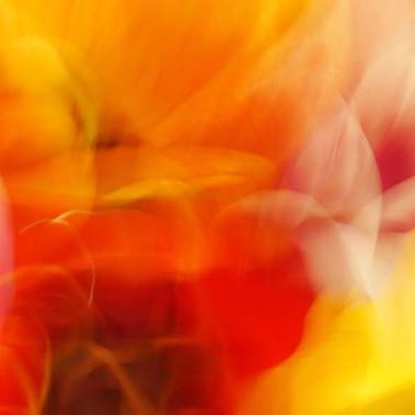 tulipane.jpg