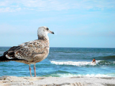 Bird and Surfer