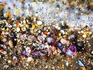 North Shore Shells