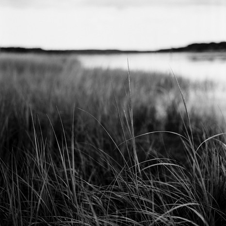 Marsh Mood