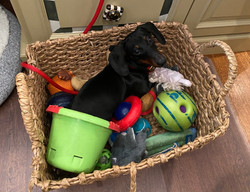 Playing in the basket