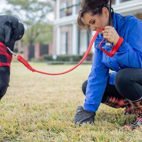 Happy Mom, Happy Dad, Happy Dog: 12 Tips on Dog Etiquette