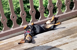 Getting a belly suntan on the patio.