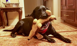 """Colonel likes to carry his stuffed """"Louie."""""""