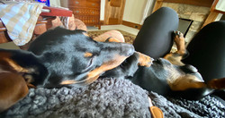 """""""Another rainy day. Watching the rain and feeling cozy on mom's stomach,"""" says Louie."""