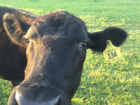 Jack County Triggers Eligibility for Livestock Forage Disaster Program