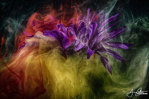 """Lotus Emerging"" Photographic Print - 8x12"