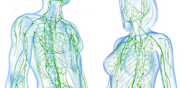 Lymphatic-System-Website-Cover.png