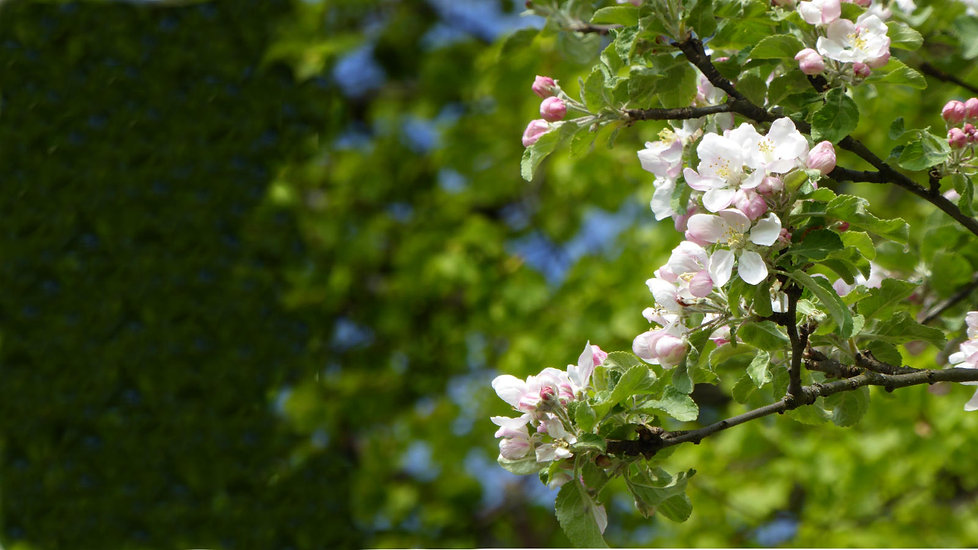 Frühling-Bildschirm_fc.jpg