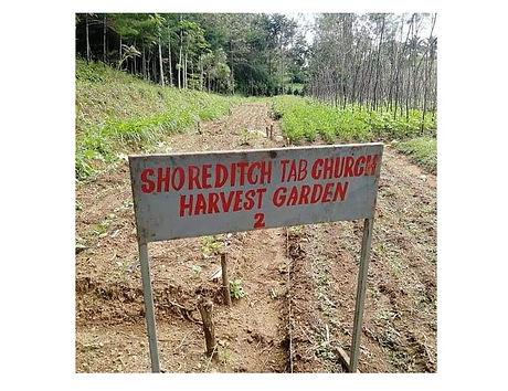 Harvest Gardens.jpeg