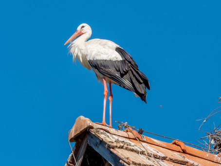 Storch in Not (19.07.2021)