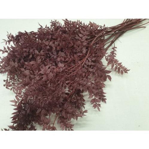 Ruscus bruin