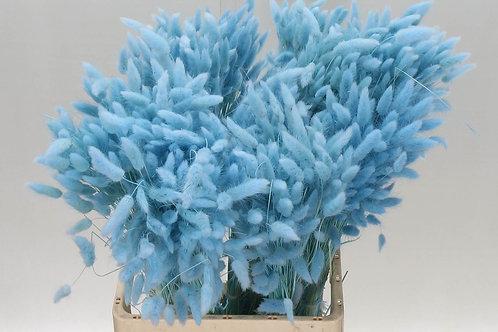 Lagurus blauw