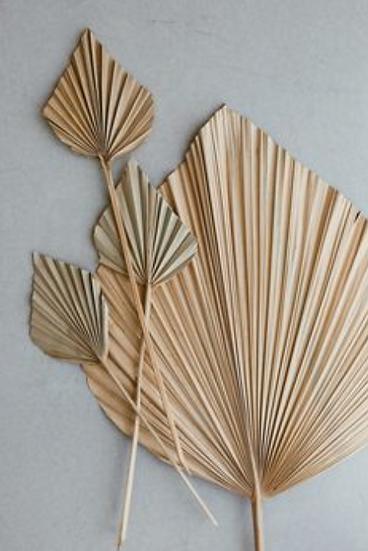 Gedroogde palmbladeren