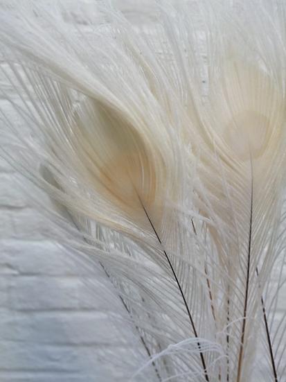 Witte Pauwenveren