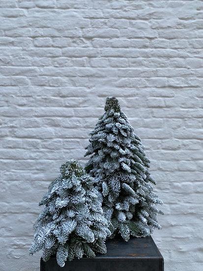 Kerstbomen met Sneeuw : Christmas Collection