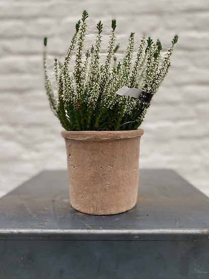 Plant : Heide