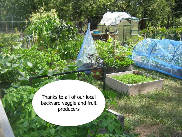 local community backyards.jpg