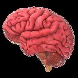 Brain-medium-29445.png