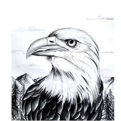 Eagle - HB Pencil Drawing - Video Recording