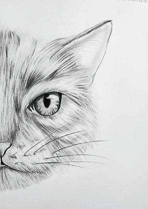 Cat Face HB Drawing - Video Recording