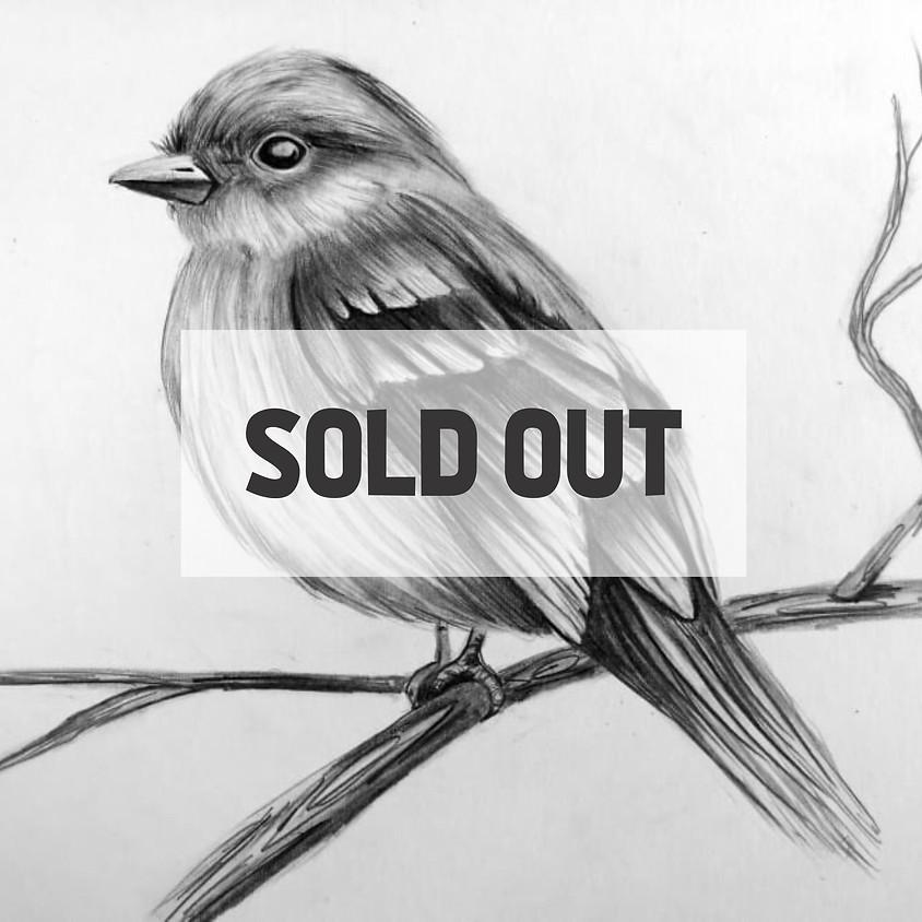 Chubby Chickadee - fine pencil drawing