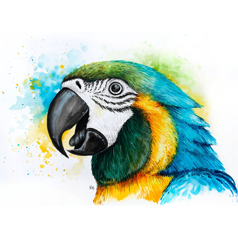 Blue-and-Gold Macaw - Watercolour